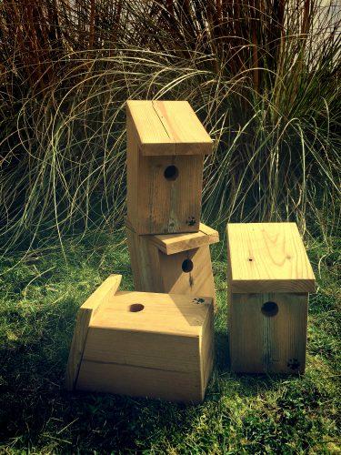 birdhouse_IMG_4175